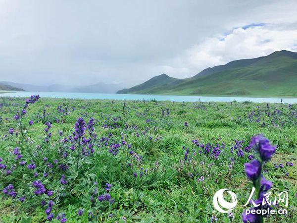 羊湖集高原湖泊、雪山、岛屿、牧场、温泉、野生动植物等多种景观为一体